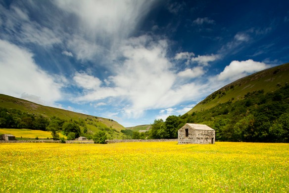 Barn in buttercup meadows, Muker, North Yorkshire Dales